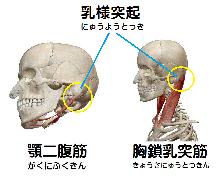 首こりの原因・治療 | 自分で治す 「かんたんマニュアル」